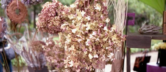 Fading hydrangea flower